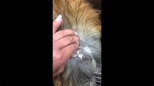 Epidermoid Cyst On Dog