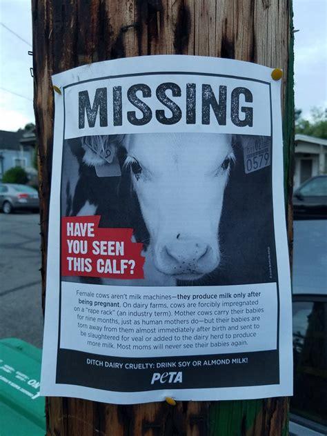 missing calf posters peta