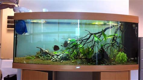 aquarium juwel vision 450 juwel vision 450 releasing discus 1