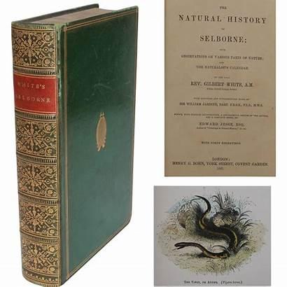 Selborne Gilbert Natural History Lane
