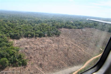clear cutting   amazon rainforest  viewed overhead