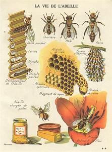 Art De Vie : pin by lyndsay sweet cuppin cakes on honey honey bees bee ~ Zukunftsfamilie.com Idées de Décoration