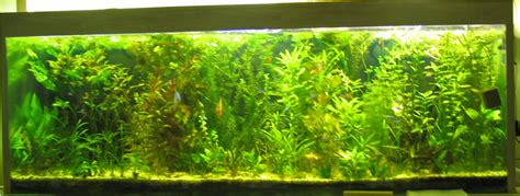 installation aquarium eau douce aquarium eau douce installation