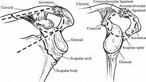 Scapula Fractures