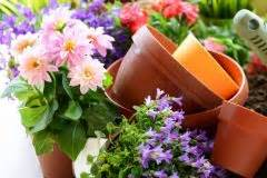 Dahlien überwintern Topf : lilienzwiebeln pflanzen eine anleitung ~ Orissabook.com Haus und Dekorationen