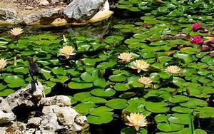 l39entretien du bassin de jardin mois par mois dossier With plan de bassin de jardin 2 lentretien du bassin de jardin mois par mois dossier