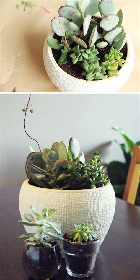 potting succulents indoors 671 best images about pots planters galore on pinterest plant pots plant stands and ceramic