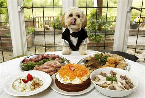 table food for dogs 9 table foods your dog should never eat a letter to my dog