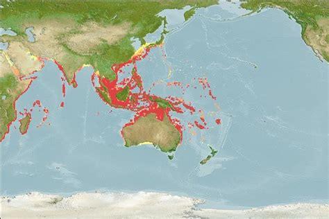 grouper distribution spotted orange epinephelus coral fishes malaysian