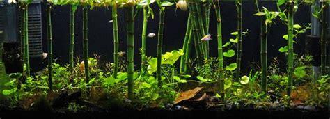 Bamboo Aquascape by Bamboo Forest Aquaria Inspiration Aquarium Aquarium