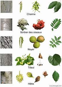 Arbre A Fruit : les arbres de la for t fleurs fruits corce et feuilles my if class trees shrubs ~ Melissatoandfro.com Idées de Décoration