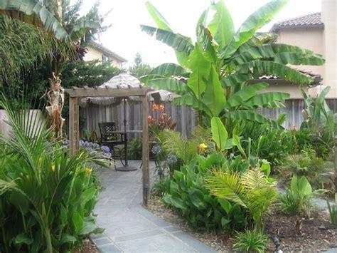 tropical backyards tropical backyard for the house pinterest