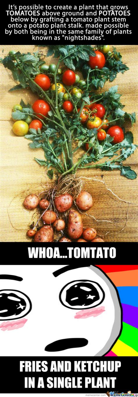 Tomato Meme - tomato memes best collection of funny tomato pictures