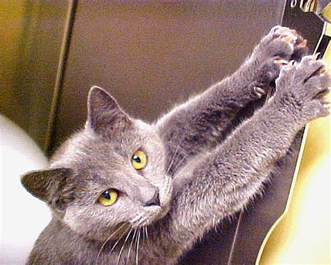 cat clawing furniture 10 ways your cat is actually saying i you 2015