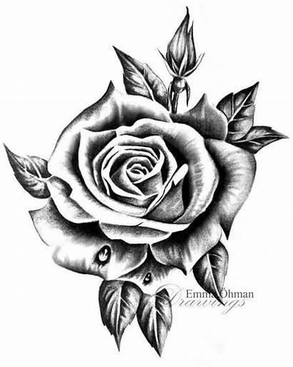 Tattoo Rose Drawing Flower Tattoos Rosa Desenho