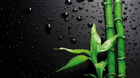 bamboo  black wallpaperscom