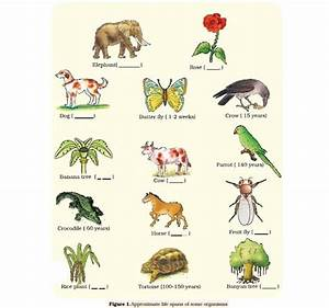 List Of Synonyms And Antonyms Of The Word Organism