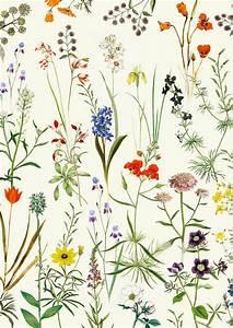 Botanical floral Vintage Print - Art poster Wall art home ...