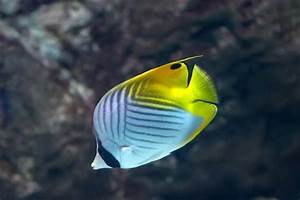 15 Most Beautiful Fish in the World (You Can Keep In Your ...