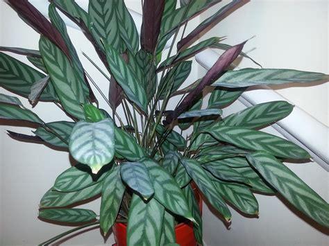 houseplant identification and care askjudy houseplant411