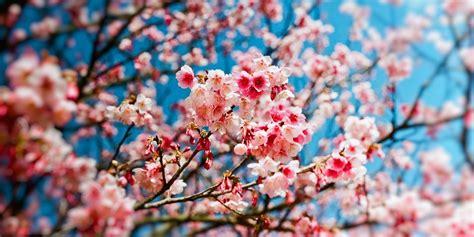 de amour de cuisine printemps pour quoi la saison débute le 20 mars