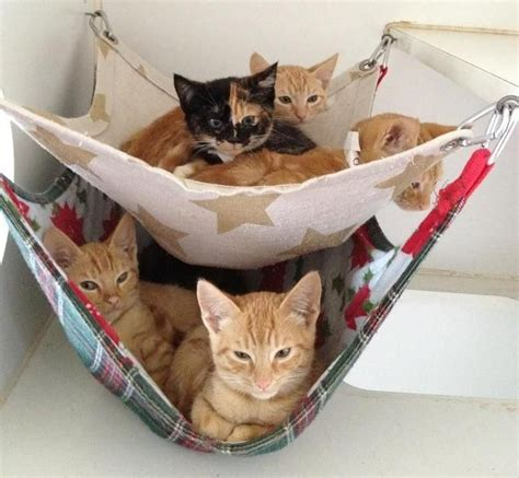 Kitten In A Hammock by Choose A Hammock For Your Cat To Enjoy A Day Wishforpets