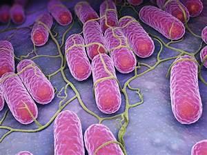 Salmonella: Sym... Salmonella