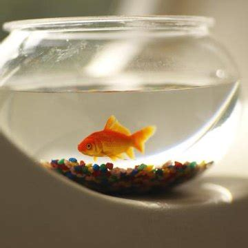 goldfish grow faster animals momme
