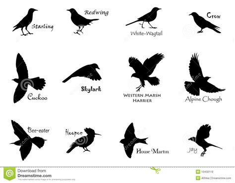 black birds royalty  stock images image