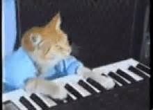 Cat Playing Piano Meme - keyboardcat gifs tenor