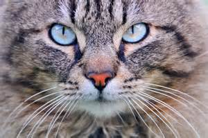what do cats eat do cats eat spiders a moment of science indiana