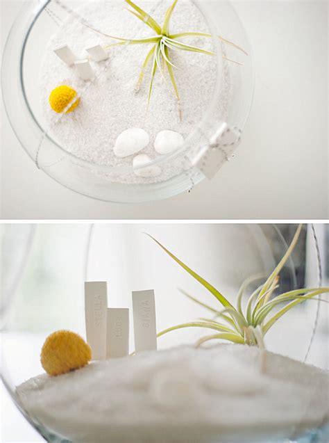 create  unforgettable air plant terrarium