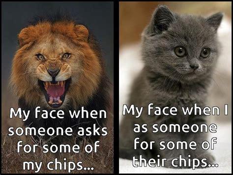Lions Memes - 85 best lion memes images on pinterest lion memes animal funnies and animal memes