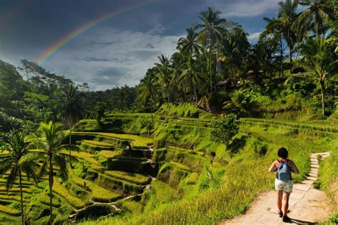 star clippers bali solo traveller offer lloyds travel