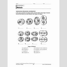 Cell Cycle And Mitosis Sequencing