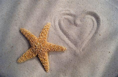 Starfish Heart Desktop Background Hd 2048x1349 Deskbgcom