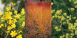 Arbustes Décoratifs à Fleurs : l 39 entretien des rosiers en hiver roses guillot ~ Premium-room.com Idées de Décoration