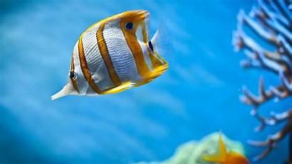 Fish Sea Animals Coral Wildlife Desktop Wallpapers