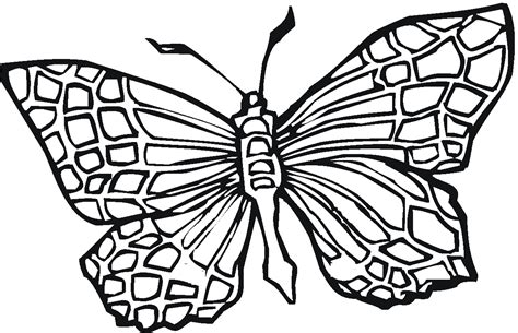 butterfly coloring pages bestofcoloringcom