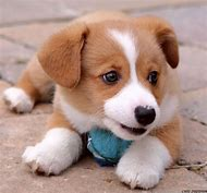 Cute Dogs and Puppies That Stay Small