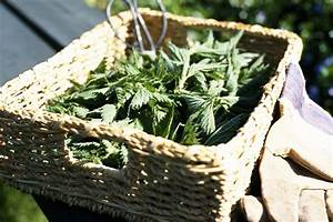 Stinging Nettle Recipes: What It Is And How To Cook It ...