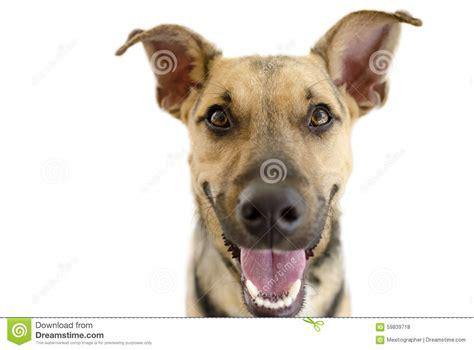 Happy Dog Isolated On White Stock Photo - Image: 59839718