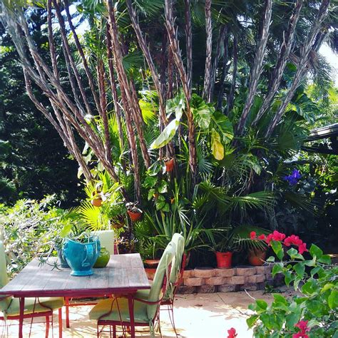 tropical garden designs decorating ideas design
