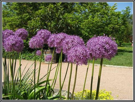 Garten Kaufen Linz by Botanischer Garten Linz Hochzeit Garten House Und