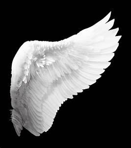 White Angel Wings Tattoo | Zoo- | reference for my ...