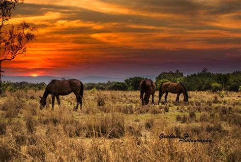 grazing horses pictures   images  facebook