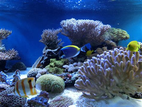 Watchopenia Under The Seaseiko Diver 200m