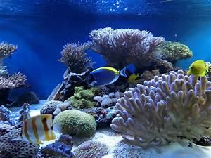 watchopenia: Under the sea......:Seiko Diver 200m  Sea
