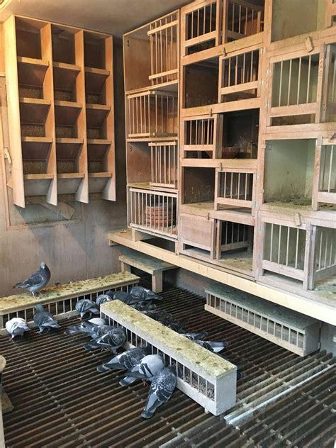 pin  eugene mc master  pigeon lofts  bird cages