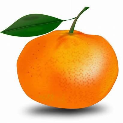 Orange Clipart Clip Fruit Vector Illustration Oranges